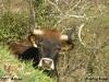 2012-03-11-alvao-carlos_faria_2