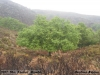 2012-04-07-sta_isabel_monte-cristina_ribeiro_2
