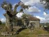 2012-05-26-briteiros_-_carlos_faria_3
