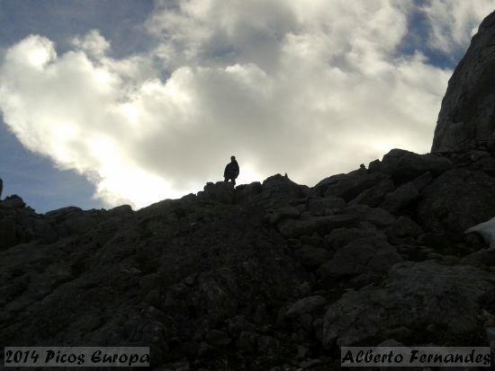 2014.06.07-PicosEuropa-AlbertoFernandes_3