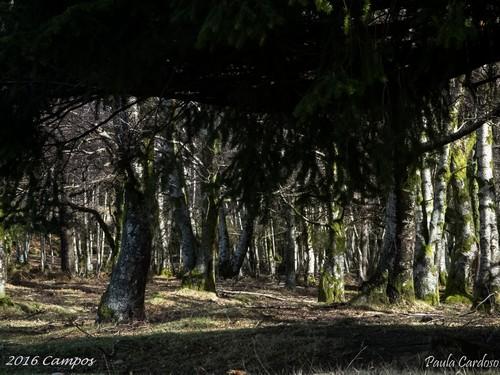 2018.02.18-Campos-PaulaCardoso_2