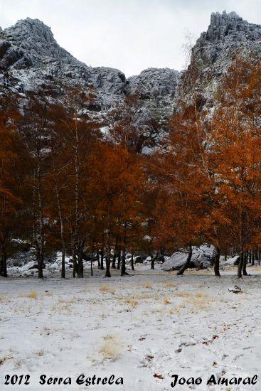 2012-12-01-s-estrela_-_joao_amaral_1