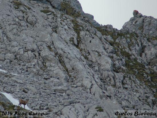2014.06.07-PicosEuropa-CarlosBarbosa_1