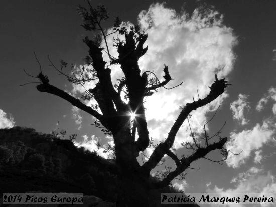 2014.06.07-PicosEuropa-PatriciaMarquesPereira_1
