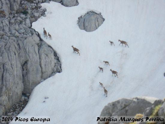 2014.06.07-PicosEuropa-PatriciaMarquesPereira_3