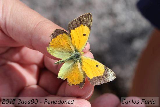 2015.07.04-3aos80-CarlosFaria_2