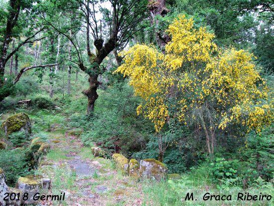 2018.05.27-Germil-MariaGracaRibeiro_3